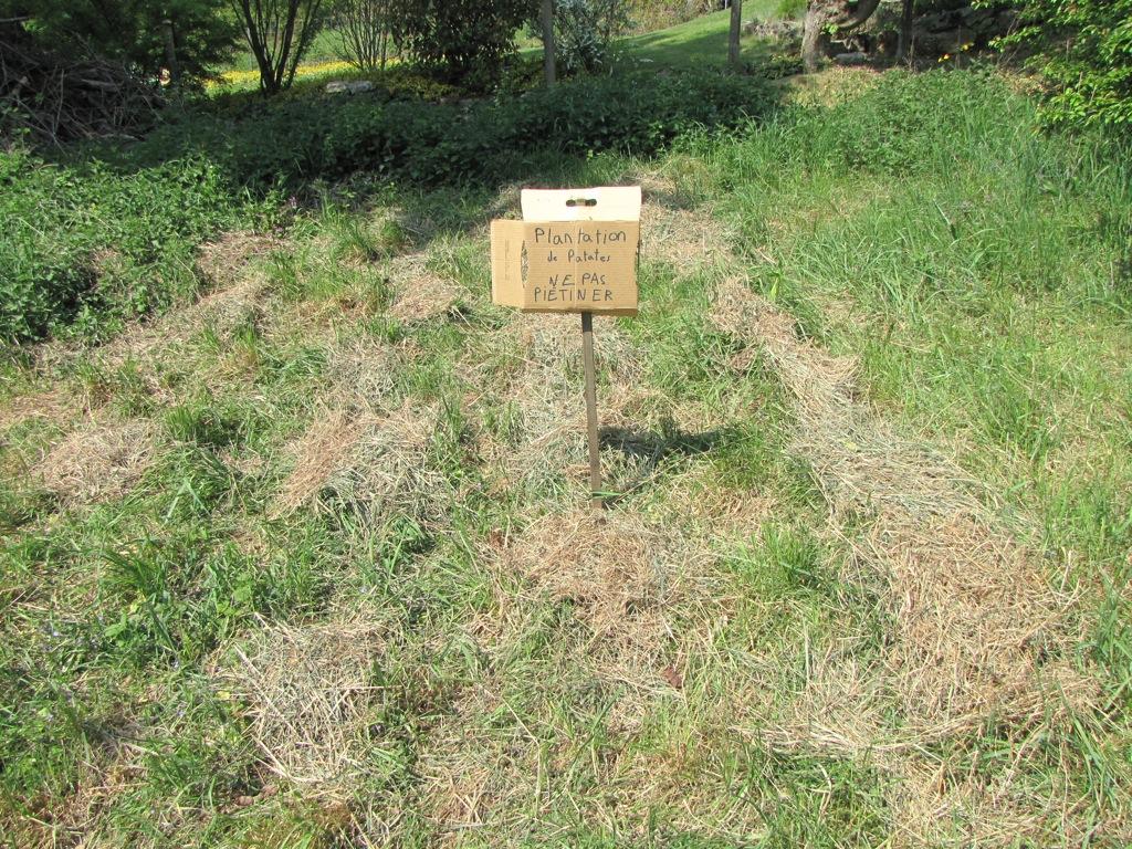 Journal de jardin le printemps est l martouf le synth ticien - Comment planter des patates ...