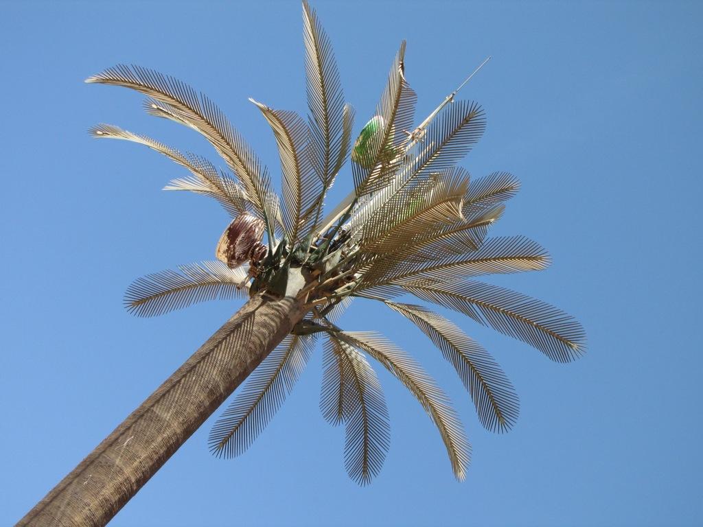 Palm Coast Hook up