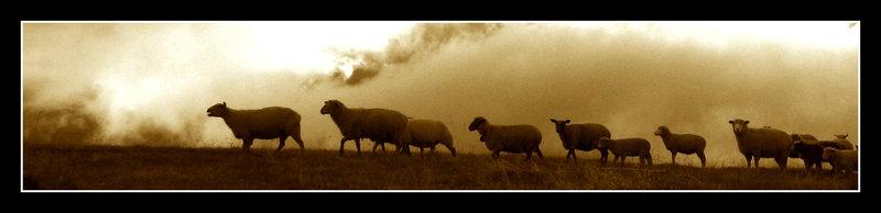 colonne de moutons.jpg
