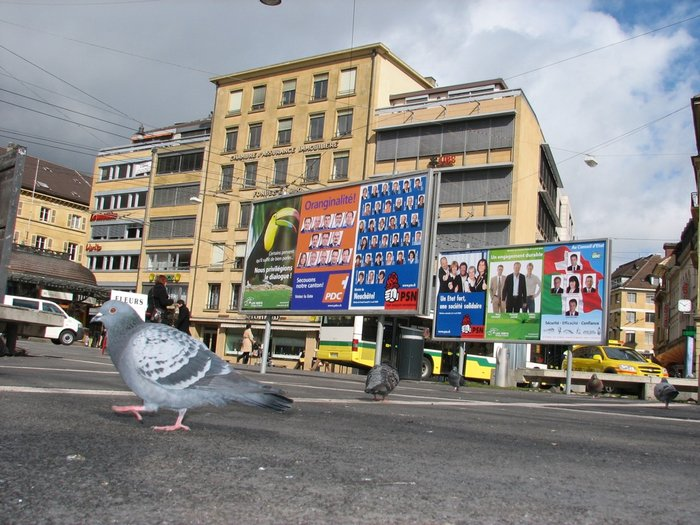 UBS politicens et pigeons.jpg