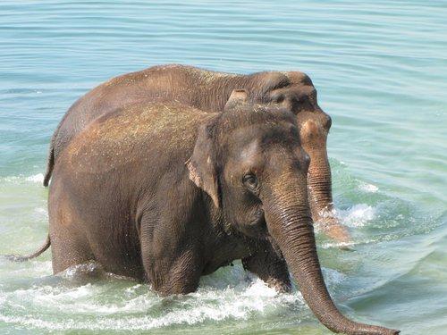 éléphant dans le lac.jpg