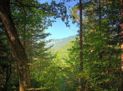 trouée dans la forêt