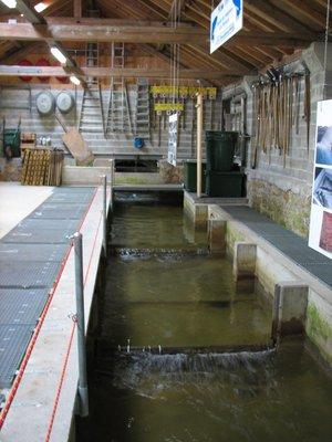 intérieur de la pêcherie de Cortaillod.jpg