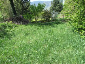 IMG_2027-herbe dans le pré.JPG