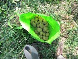 IMG_2043 patates en sac.JPG