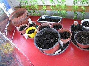 IMG_2081 plantons.JPG