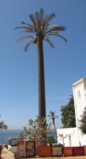 palmier bien droit artificiel.jpg