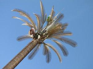 palmier avec des antennes.jpg