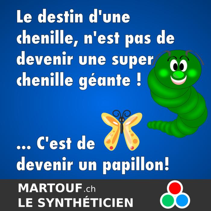 citation chenille.png