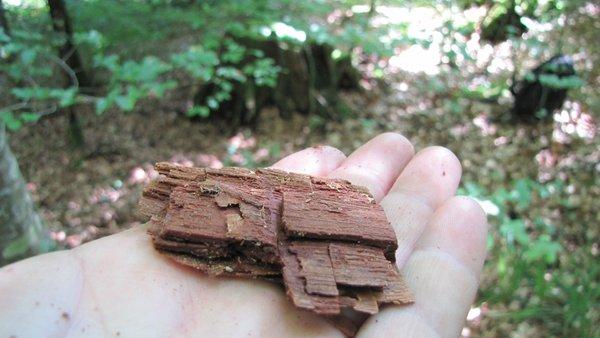 souche et morceau de vieux chêne.jpg