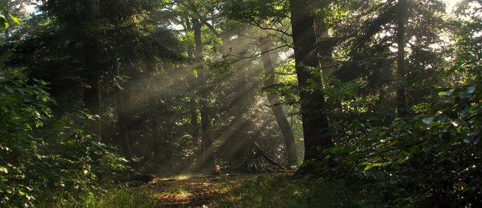 forêt enchantée.jpg