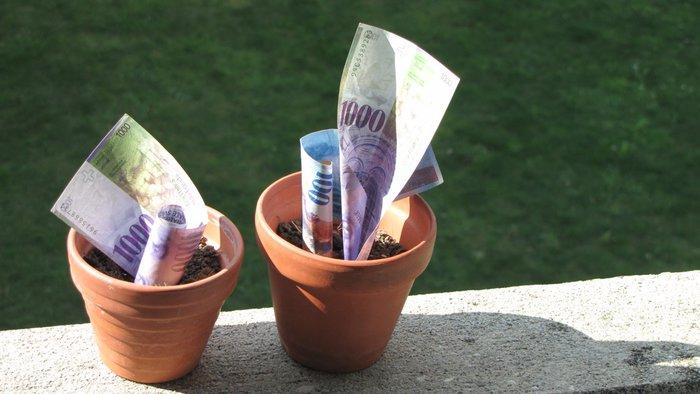 billet de banque qui poussent dans des pots.jpg