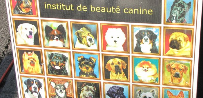 institut de beauté canine.JPG