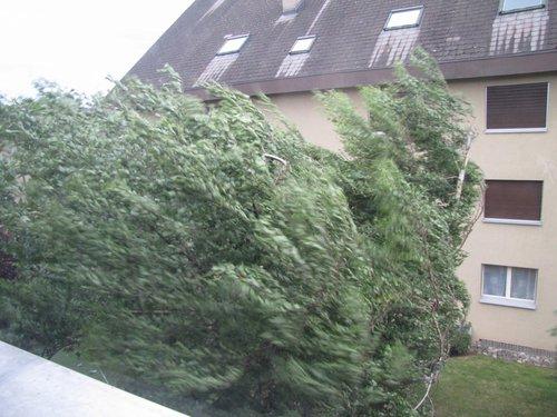 tempête de vent dans un arbre.jpg