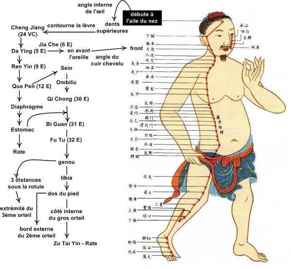 accupuncture méridien weijing2.jpg