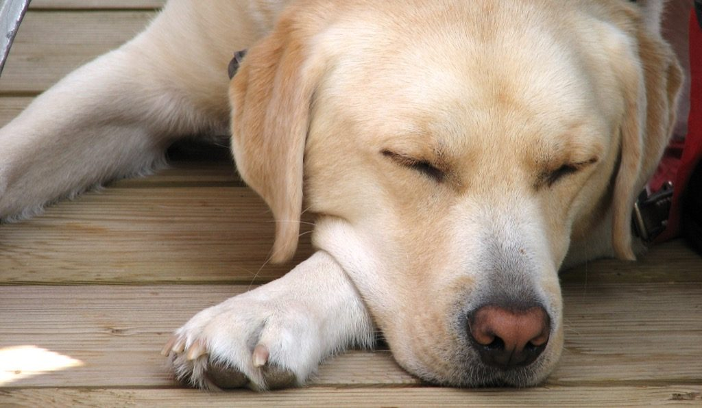dormir pour gerer ses emotions