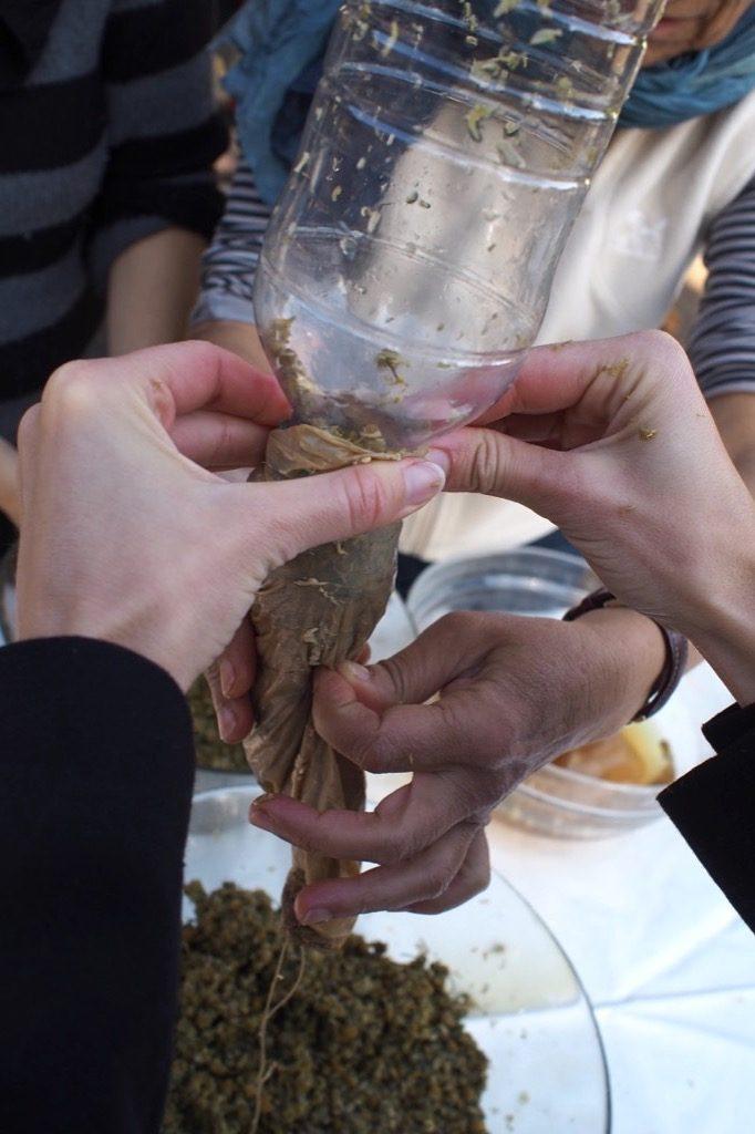 Preparat biodynamie Camomille Matricaria saucisse