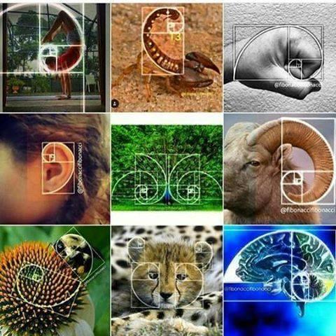 nombre d'or spirale