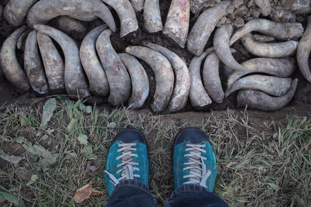 pieds de Martouf bouse de corne