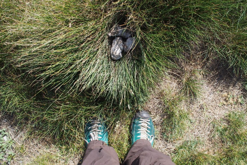 pieds de Martouf crotte de loup abruzzes