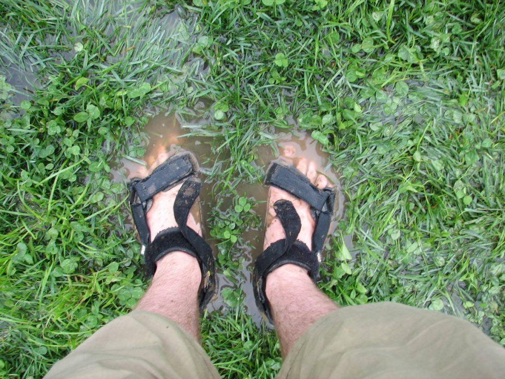 pieds de Martouf herbe humide