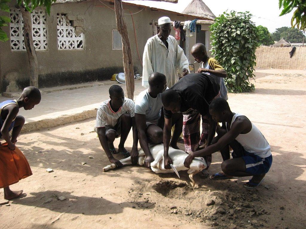 sacrifice-animal-pour-la-fete-du-mouton-el-aid-senegal-1600px-Tabaski-Kounkane