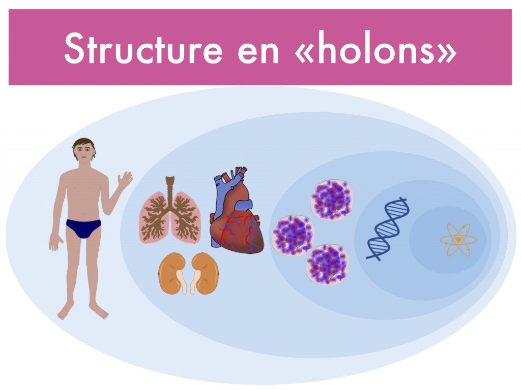 structure-en-holon-holarchie