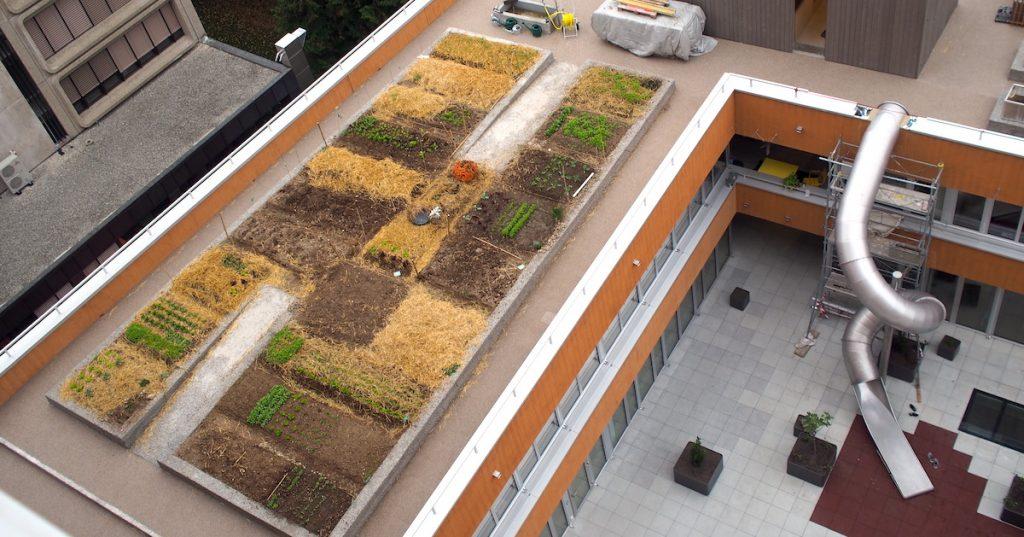Jardin sur le toit d'une coopérative d'habitant à Genève.