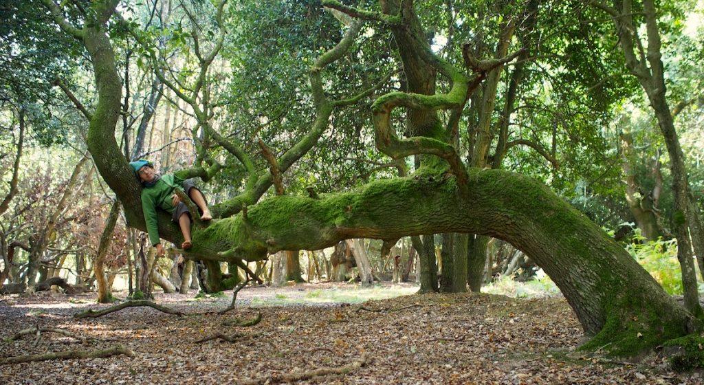 yggdrasil-arbre-monde-odin-recois-les-runes