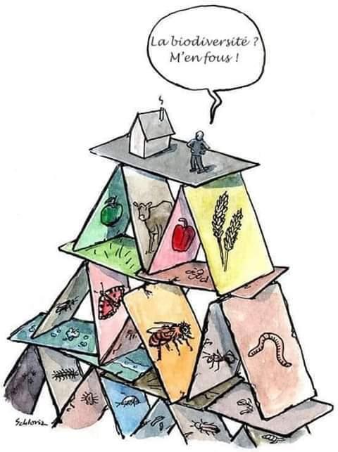 biodiversité château de carte