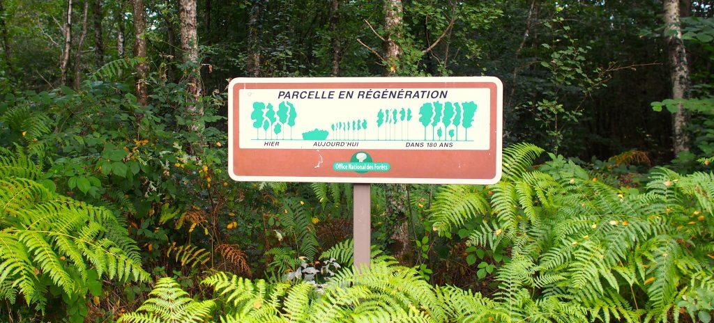 évolution forêt cycle vie