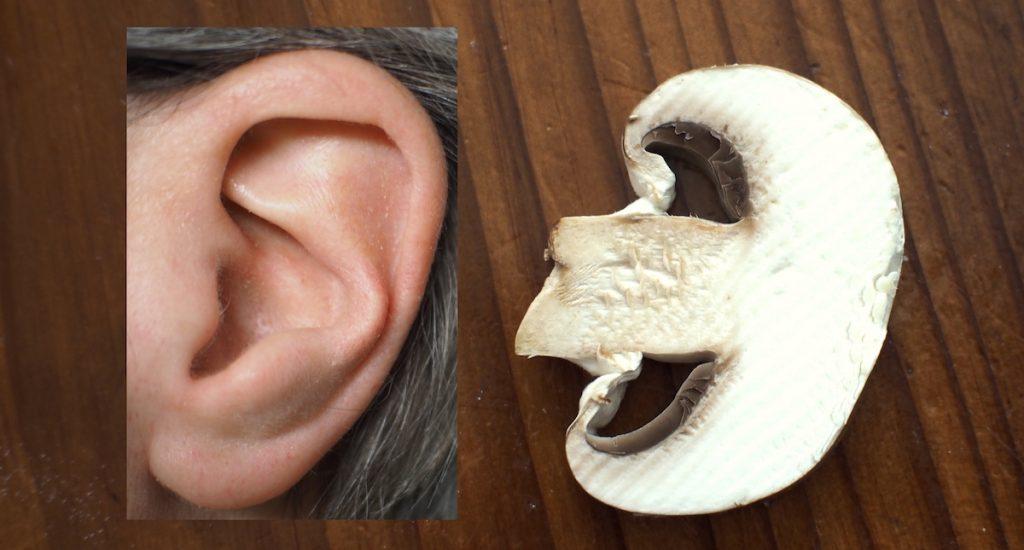 theorie des signatures oreille champignon