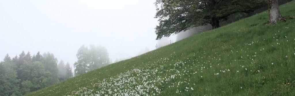 perdu dans le brouillard-narcisse