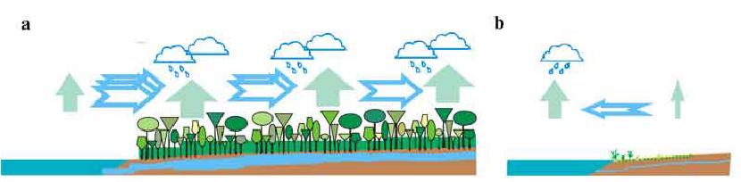 pompe biotique évapotranspiration forêt pour transporter de l'eau.